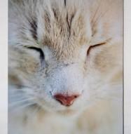 Art Acoustic Panel Cat Close Up