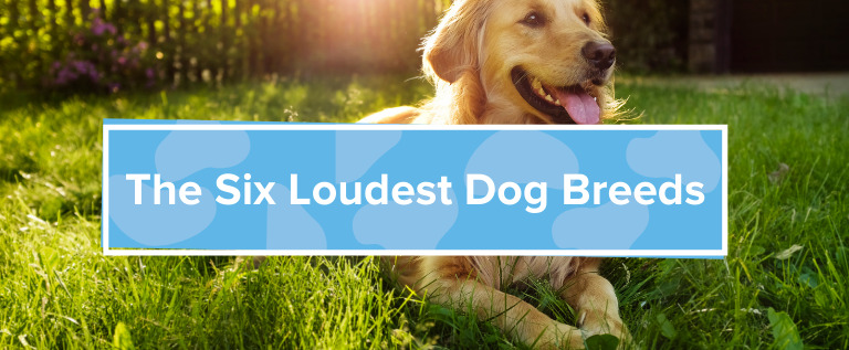 The 6 Loudest Dog Breeds