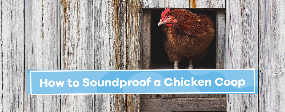 How to Soundproof a Chicken Coop