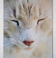 Art Acoustic Panel Cat Close Up